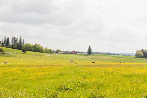 Die unendlichen Weiden des Kantons Jura