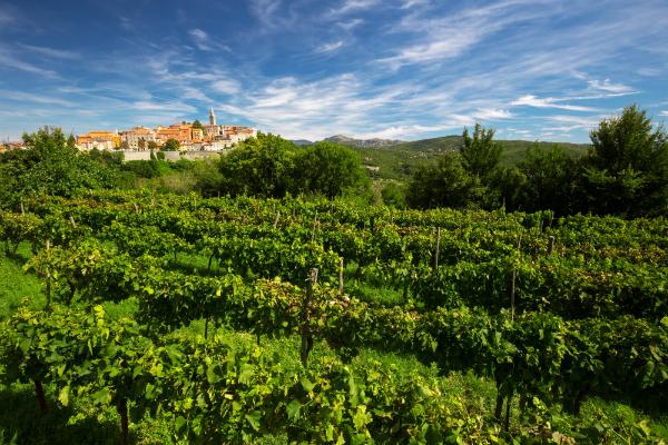 Labin - Ländliche Lage zwischen Berg, Wein und Adria