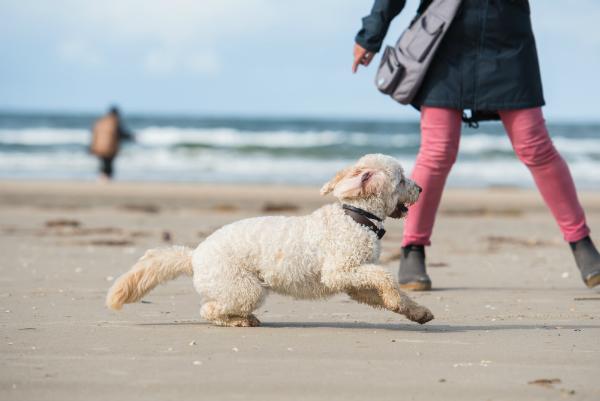 Hundecamping in Daenemark