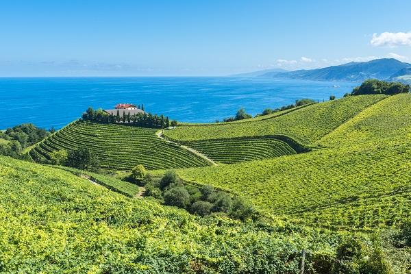 Oliven und Wein gibt es in Spanien zu genüge