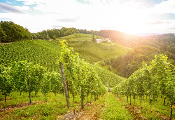 Weinberge Suedsteirische Weinstrasse Herbst