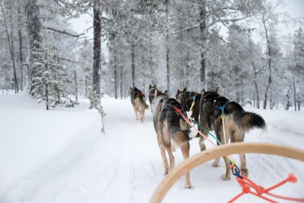Husky-Schlitten in Lappland