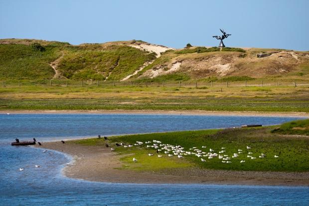 Het Zwin - Küstenlandschaft