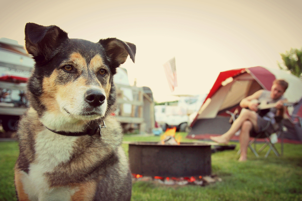 Hund auf Campingplatz - mit der ACSI Campingcard 2019 kostenlos