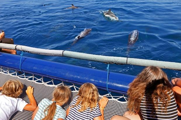 Delfinbeobachtungen vom Schiff aus - der kürzeste Weg zum Meer von der Schweiz aus
