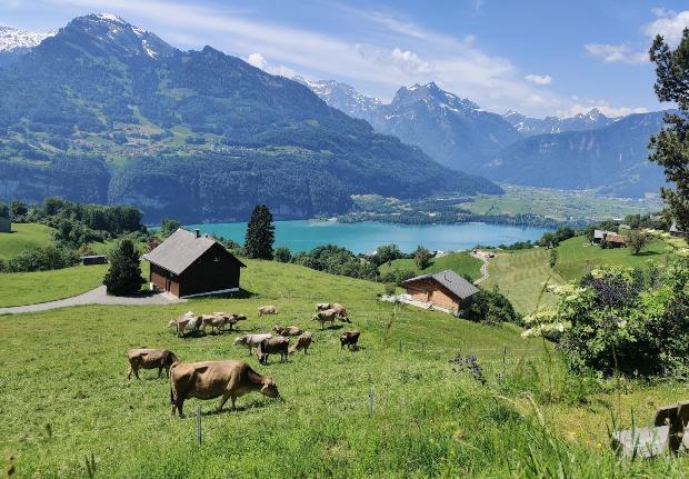 Walensee in den Kantonen St. Gallen und Glarus